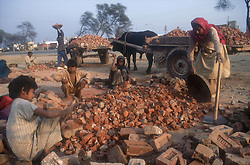 Family group at work using hammers to break bricks for road mending and lifting broken brick onto carts pulled by buffalo,