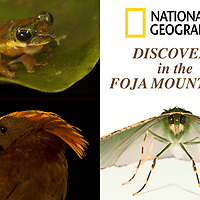 Nat Geo: Discovery in the Foja Mountains