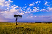 A herd of zebra, Masai Mara National Reserve, Kenya