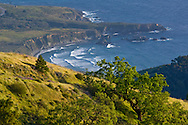 Oak trees and green hills in Spring over the ocean, Ventana Wilderness, Los Padres National Forest, Big Sur coast, California Oak trees and green hills in Spring over the ocean, Ventana Wilderness, Los Padres National Forest, Big Sur coast, California