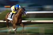 November 1-3, 2018: Breeders' Cup Horse Racing World Championships. Dabster Jon Court gallop past the finish in the Marathon Stakes race