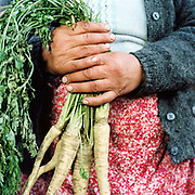 A peasant farmer holds organically grown parsnips for sale at the market in Sighetu Marmatiei, Maramures, Romania. 90% of vegetable production is grown in small household plots and mainly used for self-consumption and for sale on local markets.