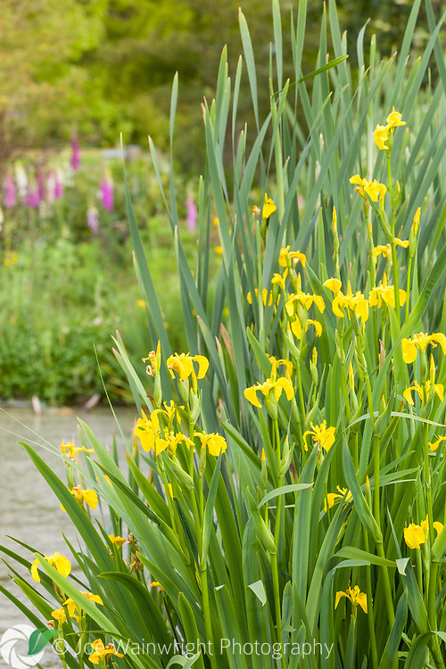Stretton Old Hall is a five acre Cheshire countryside garden surrounding a 17th century house, with 19th century additions. It is contemporary in design, with a heavy use of  perennials, colour, form and scale. It's divided into several distinct 'rooms', including a lawned area edged with herbaceous borders; a scree garden; a walled kitchen garden and glass house; wild flower meadows; and a wildlife walk around a lake with views over the surrounding countryside.<br /> <br /> This image is available for sale for editorial purposes, please contact me for more information.