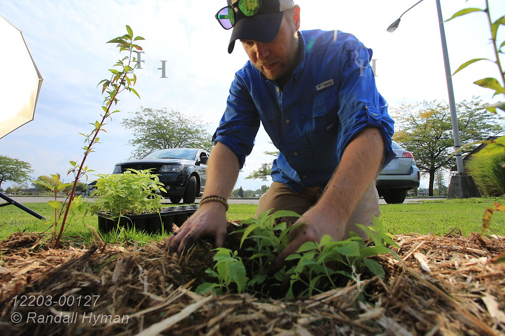 High school environmental sciences teacher Luke Freeman plants wildflowers in bioswale of rain garden at River Side Park in Au Gres, Michigan.