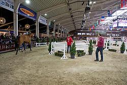 077, Cayenne vd Helle Z<br /> BWP Hengsten keuring Koningshooikt 2015<br /> © Hippo Foto - Dirk Caremans<br /> 22/01/16