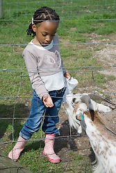 Young girl feeding at a goat on a visit to a city farm,