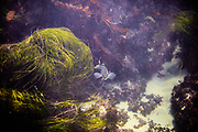 Underwater and water photography Orange county