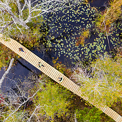 Runners on a new boardwalk in a cedar swamp at the Witt Swamp Preserve in Norway, Maine. Fall.