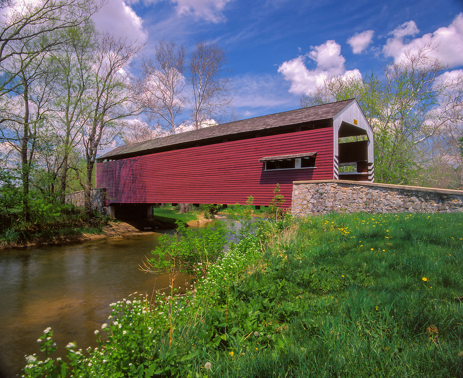 Shenck's Mill Covered Bridge, 1855, with wild garlic mustard, Salunga, PA