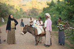 Ramla (wearing black headscarf) helps a neighbor with her donkey loaded with coffeee cherries in the village of Choche. Choche is beleived to be the original ancestral birthplace of coffee in the region of Jimma, Ethiopia (Jimma was once the capital of the region known as Kaffa) .     Coffee permeates the cultural fabric of Ethiopian life and it unites the country. It binds the many different ethnic groups together, Christian or Muslim, rich or poor. An elaborate extension to Ethiopia's warm sense of hospitality, the coffee ceremony is a daily social ritual to honour the importance of the bean, and strengthen human bonds.