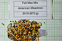 Fall Maximum Wildflower mix seeds from American Meadows. Image taken with a Fuji X-H1 camera and 80 mm f/2.8 macro lens + 1.4x teleconverter