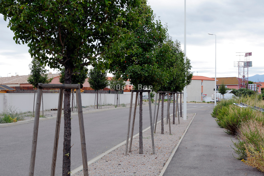 new trees planted at the edge of new residential development project