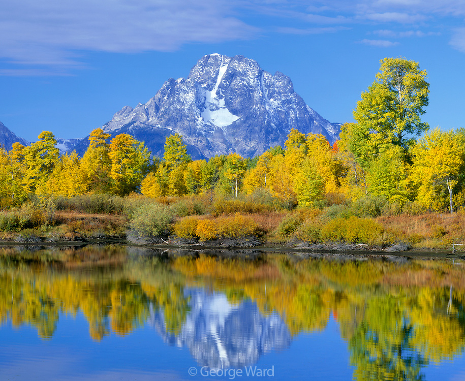 Aspen, Mount Moran and the Snake River, Grand Teton National Park, Wyoming