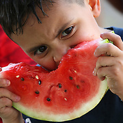 Israel Rios, 7, takes a bite of a large watermelon slice Saturday, May 12, 2018, at the Watermelon Festival in Alamo. photo by Nathan Lambrecht/The Monitor