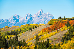 Autumn in Jackson Hole Wyoming.   The panoply of color on the good years is a candy for the eye and food for the soul.