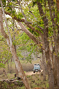 A safari jeep in Bandipur National Park, Karnataka, India