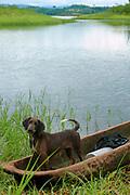 Perro y cayuco / Lago Bayano, Panamá.<br /> <br /> Edición de 5   Víctor Santamaría.
