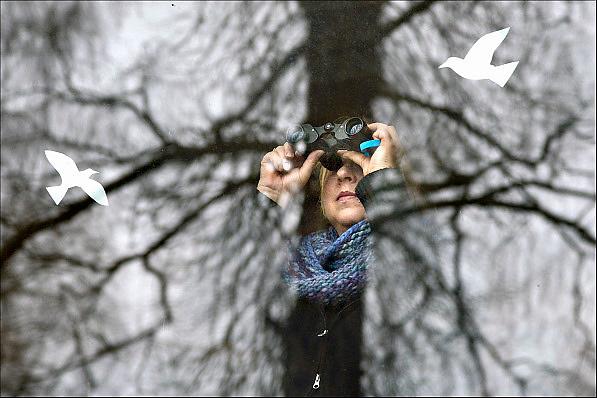 Nederland, Ubbergen, 18-1-2015 Een vrouw kijkt met een verrekijker in de tuin tijdens de nationale tuinvogeltelling. Op het raam waar zij achter staat zijn silhouetten ven vogels geplakt om te voorkomen dat echte vogels tegen het glas vliegen. Foto: Flip Franssen/Hollandse Hoogte