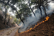 A brushfire, Sunday, Sept. 3, 2017, in Burbank, Calif. Several hundred firefighters worked to contain a blaze that chewed through brush-covered mountains, prompting evacuation orders for homes in Los Angeles, Burbank and Glendale.(Photo by Ringo Chiu)<br /> <br /> Usage Notes: This content is intended for editorial use only. For other uses, additional clearances may be required.