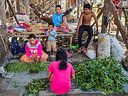 31 MAY 2016 - SIEM REAP, CAMBODIA: People cut up water hyacinth to use in salads in a small village near the Tonle Sap lake south of Siem Reap. The area is experiencing a record breaking drought and relying on emergency wells for domestic water. The village normally floods in the rainy season, and their homes, built on stilts nearly 30 feet above the ground, accommodate the floods, but it's not clear  yet if the village will flood this year. Officials hope the rainy season starts in coming weeks.    PHOTO BY JACK KURTZ