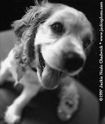 Samantha as a puppy.