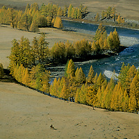 MONGOLIA, Mongolian herder rides along river and fall-colored larch trees west of Darhad Valley.