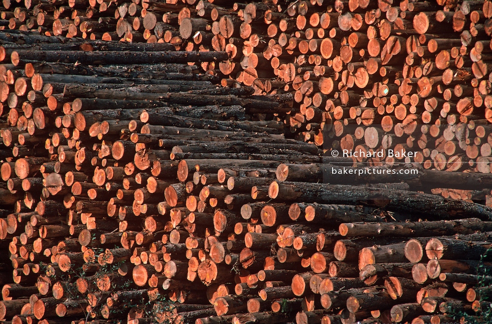 Piles of trimmed raw timner logs awaiting shipment from a timber yard near Eureka, California.