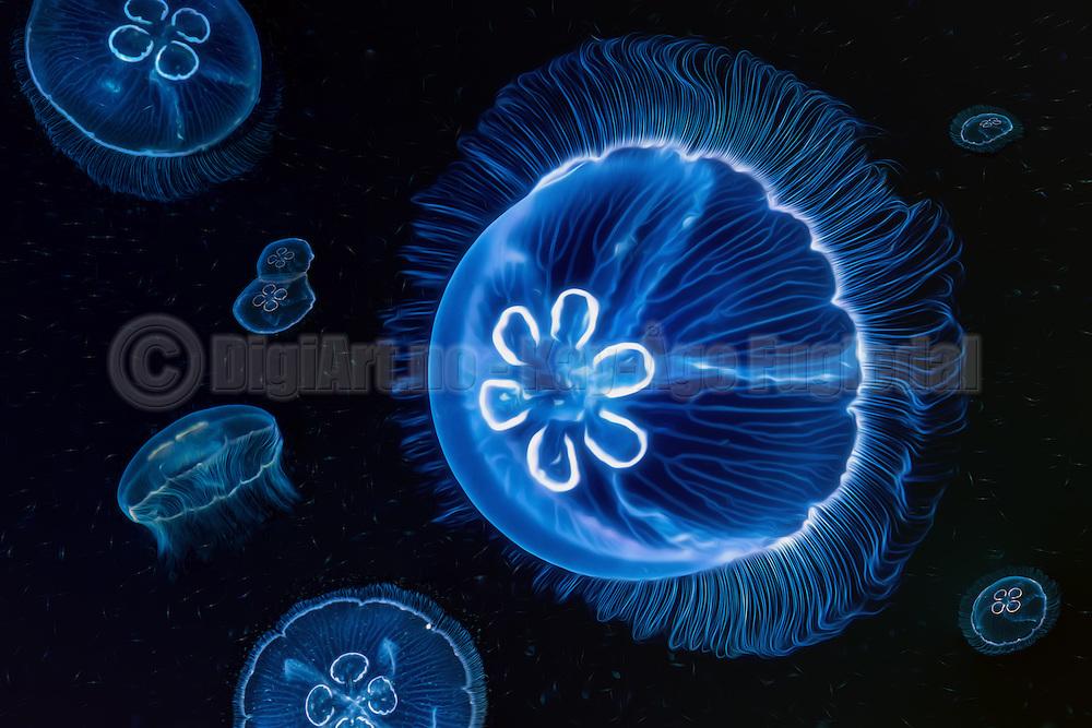 Jellyfishes swiming in the ocean. Collage. Pictureart   Glassmaneter som svømmer i sjøen. Collasj. Bildekunst.