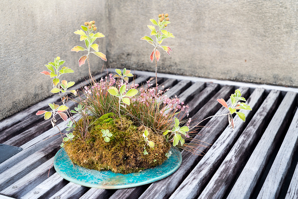 bonsai style various grasses plant
