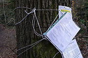 The notification of a tree removal notice and injunction against obstruction is attached to the trunk of an oak tree in Sydenham Hill Woods, the scene of a protest against the proposed felling of two 100+ year-old oak trees, threatened by Southwark Council because of their proximity to 'Pissarro's' footbridge whose renovation has been deemed necessary by the local authority, on 24th November 2020, in London, England. The Nunhead to Crystal Palace (High Level) railway once passed through the Wood and Impressionist artist Camille Pissarro (1830–1903) famously painted a railway landscape from the bridge in the 1870s. Sydenham Hill Wood forms part of the largest remaining tract of the old Great North Wood, a vast area of worked coppices and wooded commons that once stretched across south London. The habitat is home to more than 200 species of trees and plants as well as rare fungi, insects, birds and woodland mammals.
