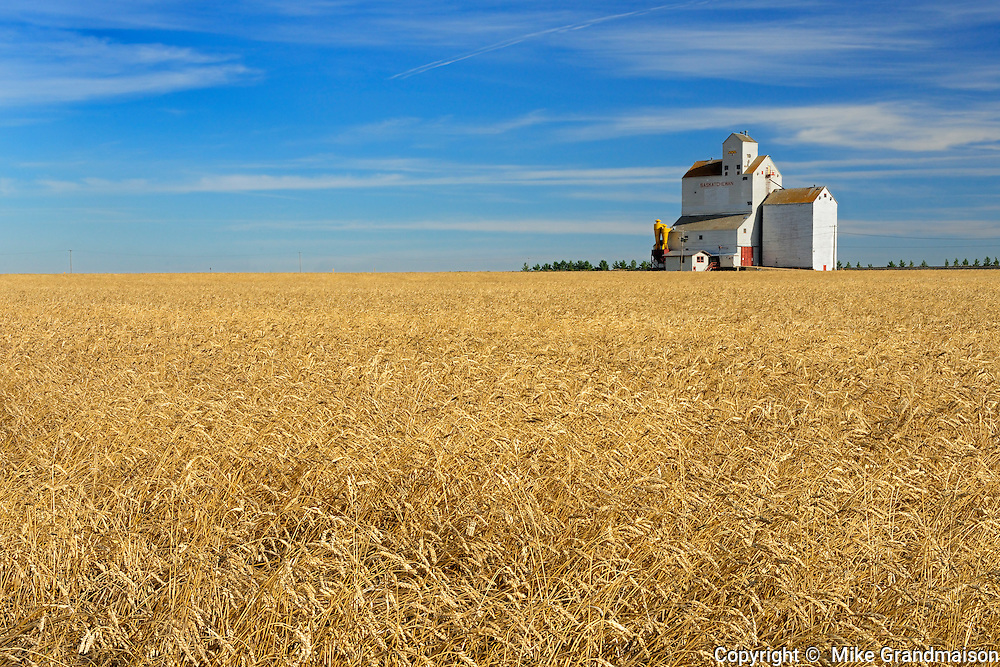 Grain elevator and wheat field<br /> Lang<br /> Saskatchewan<br /> Canada