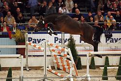 083 - Zico Sw<br /> KWPN Hengstenkeuring 2007<br /> Photo © Hippo Foto