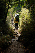 A hiker stops to admire the scenery after pasing through a bamboo grove on Snow Mountain, Taiwan.