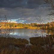 A pair of trumpeter swans (Cygnus buccinator) on a small lake near Crosslake, Minnesota.