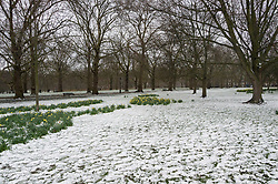 © Licensed to London News Pictures. 18/03/2018. London, UK. Snow has fallen overnight and settled in Green Park. Photo credit: Ray Tang/LNP