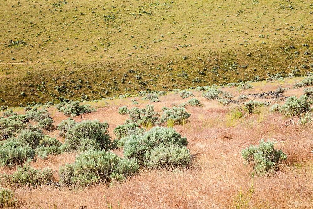 Sage and grass covered hills, Beezley Hills outside Ephrata, Washington, USA.