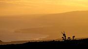 A golden hue enveloped us for sunset.