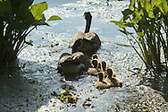 Mamakating, New York - Spring scenes at the Bashakill Wildlife Management Area on May 2, 2013.
