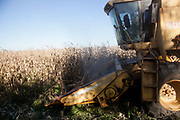 Combine harvester yellow cropping a corn filed. Brazil is the largest producer of Sugar and Beef, then second for Soya and third for Maize. Many of the farms are in the state of Mato Grosso and Mato Grosso do Sul, they are often enournmous, stretching for miles kilometres. A lot of the crops are processed on site and kept in large warehouses or silos.