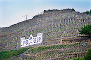 Terraced vineyards in the Cote Rotie district around Ampuis in northern Rhone planted with the Syrah grape. A sign for Vidal-Fleuri, one of the main producers owned by Guigal, also saying Cote Rotie Cote Blonde.   Ampuis, Cote Rotie, Rhone, France, Europe