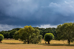 © Licensed to London News Pictures. 24/08/2020. London, UK. As families enjoy the mild temperatures this afternoon in Richmond Park, dark clouds loom over South West London as forecasters warn that Storm Francis is set to batter the UK later to night with winds in excess of 50mph along with heavy rain. The Met Office has issued a yellow weather warning for high winds for most of the country which could lead to travel disruption and damage to trees. Photo credit: Alex Lentati/LNP
