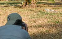 Photographer Yamil Saenz approaches a black spiny-tailed iguana, Ctenosaura similis, on the grounds of Punta Leona Hotel and Resort, Costa Rica