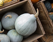 Blue squash in a wooden crate, Common Ground Fair, Unity, Maine.
