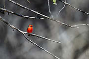 Wildlife photographs from Lake Patagonia State Park Arizona, USA
