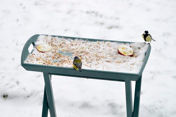 Nederland, Ubbergen, 21-1-2013In een tuin staat een voedertafel voor de vogels.Door de sneeuwval kunnen zij moeilijk aan voedsel komen.Foto: Flip Franssen/Hollandse Hoogte