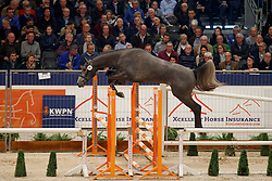 085, Cote De Zelande Delta Mossel Z<br /> KWPN Stallionshow - 's Hertogenbosch 2018<br /> © Hippo Foto - Dirk Caremans<br /> 31/01/2018
