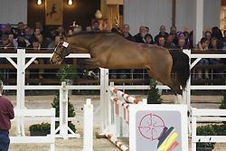 021 - Mijnheer van de Lentamel<br /> Hengstenkeuring BWP - Azelhof - Koningshooikt 2015<br /> ©  Dirk Caremans