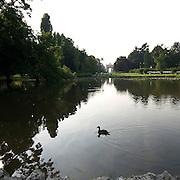 Un'anatra nel laghetto del Parco Sempione..A duck in the pond of Parco Sempione in Milan