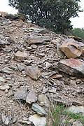 Chateau des Erles. In Villeneuve-les-Corbieres. Fitou. Languedoc. Terroir soil. France. Europe. Schist slate soil.