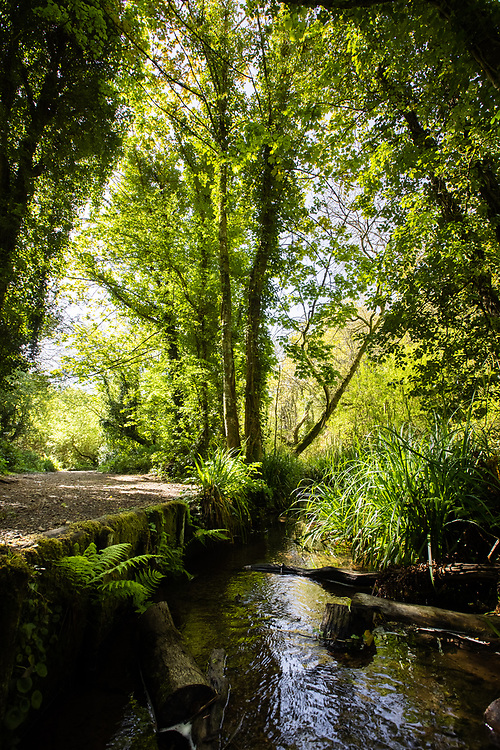 A country scene in the woods at St Catherine's - walking paths, green trees and plants and the stream, Jersey, CI